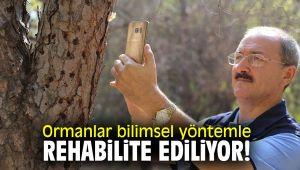 Ormanlar bilimsel yöntemle rehabilite ediliyor!
