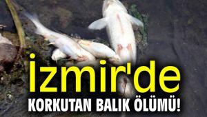 İzmir'de korkutan toplu balık ölümü!