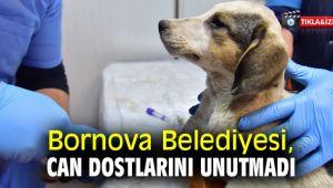 Bornova Belediyesi, can dostlarını unutmadı