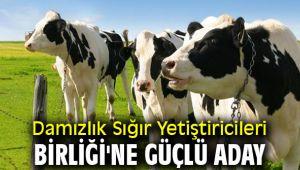 Damızlık Sığır Yetiştiricileri Birliği'ne güçlü aday